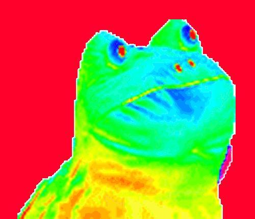 Hypnotic frog gif