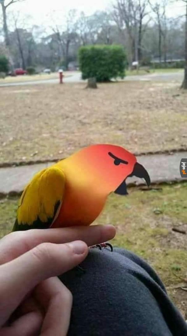 Ptaszek się zezłościł