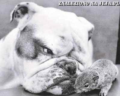 Pies i chomik