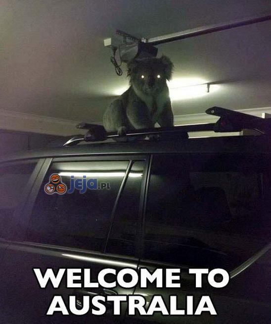 Witamy w Australii
