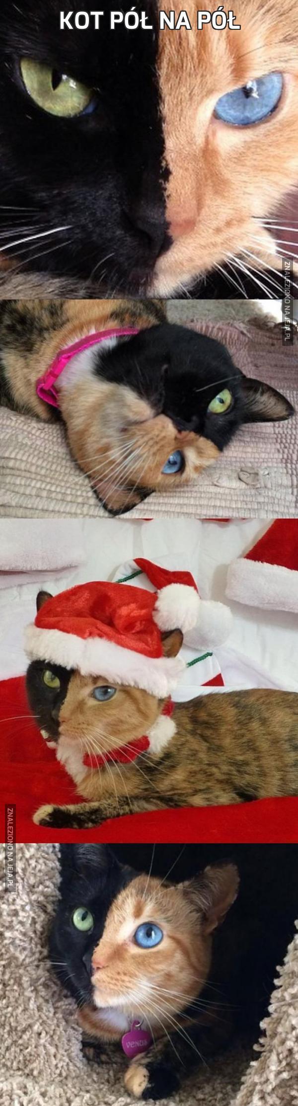 Kot pół na pół