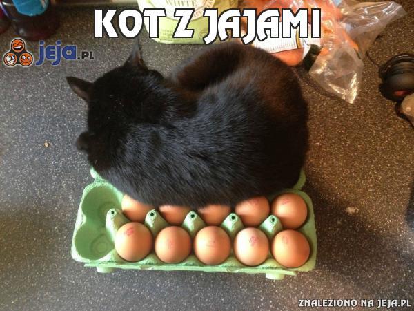 Kot z jajami