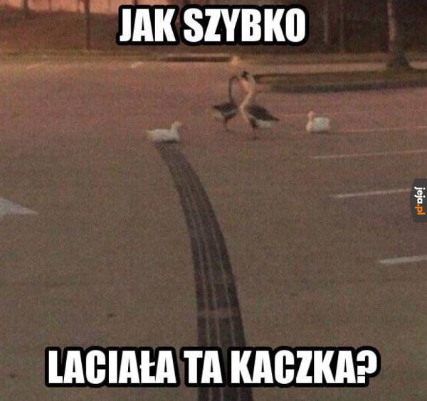Najszybsza kaczka na świecie