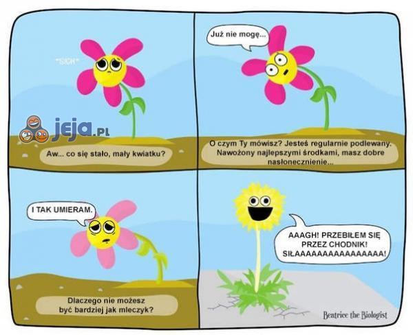 Polityka kwiatków