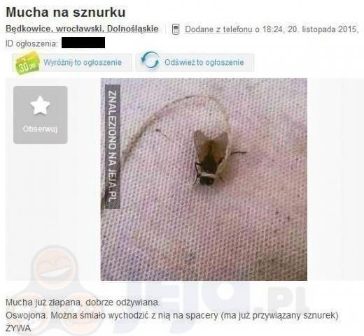 Mucha na sznurku