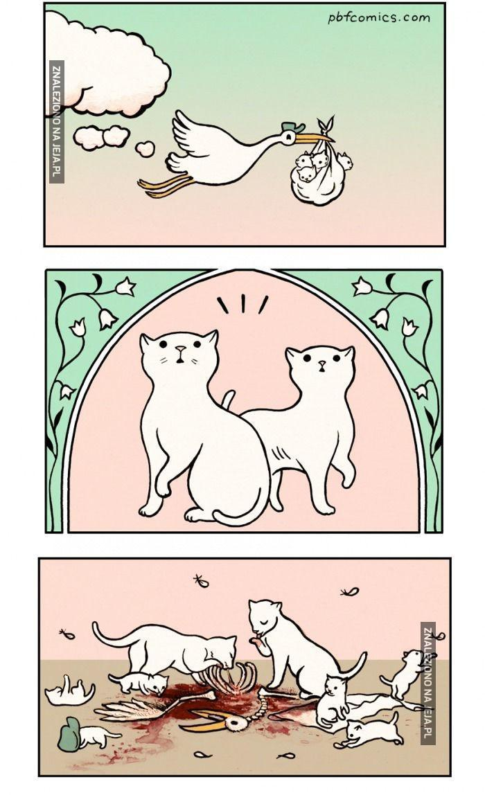 Skąd się biorą małe kociaki