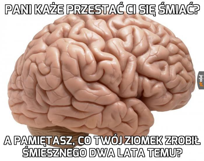 Mózgu, przestań