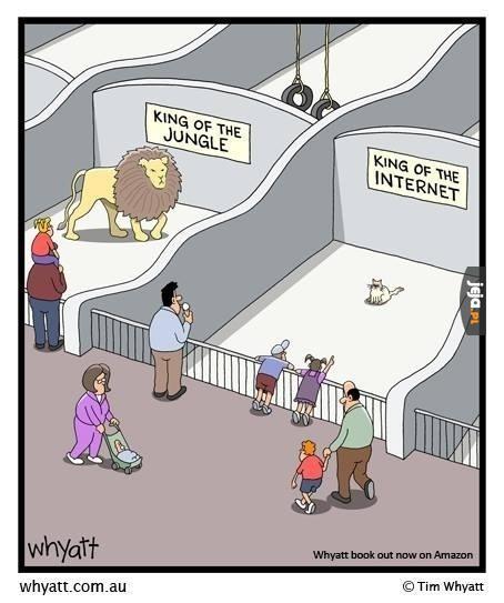 Tymczasem w zoo