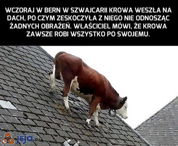 Każdy jest trochę dziwny. Nawet krowa