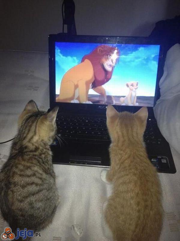 Ulubiony film kotów