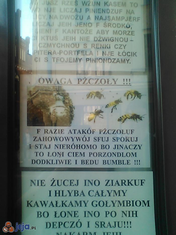 Takie rzeczy tylko w Toruniu