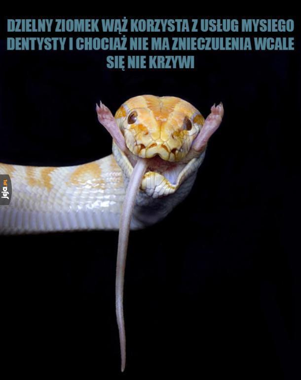 Dzielny ziomek wąż!