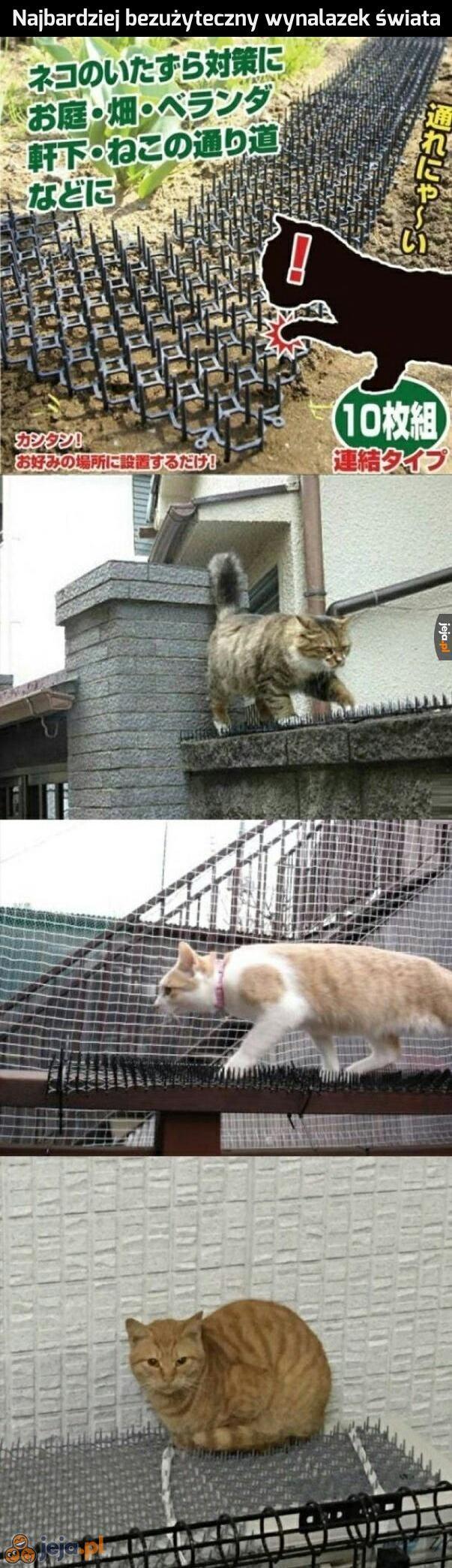 Ktoś nie docenił kotów