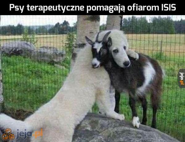 Terapia dla kozy