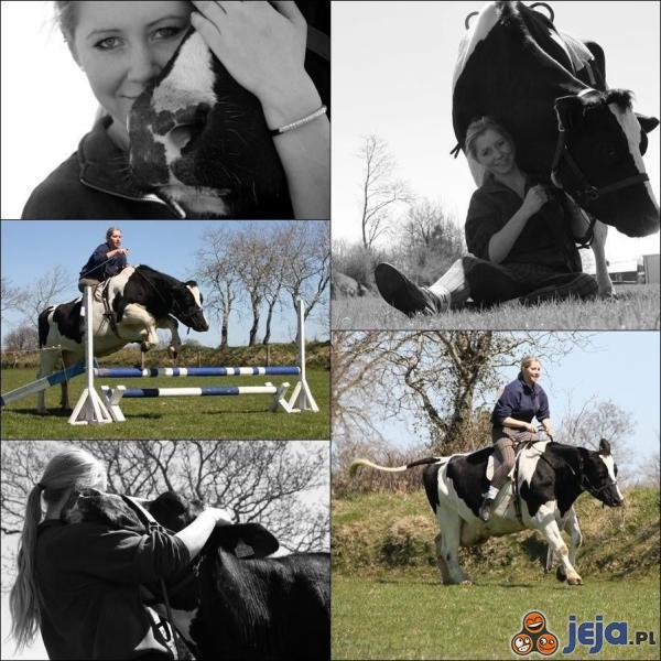 Krowa, która chciała być koniem