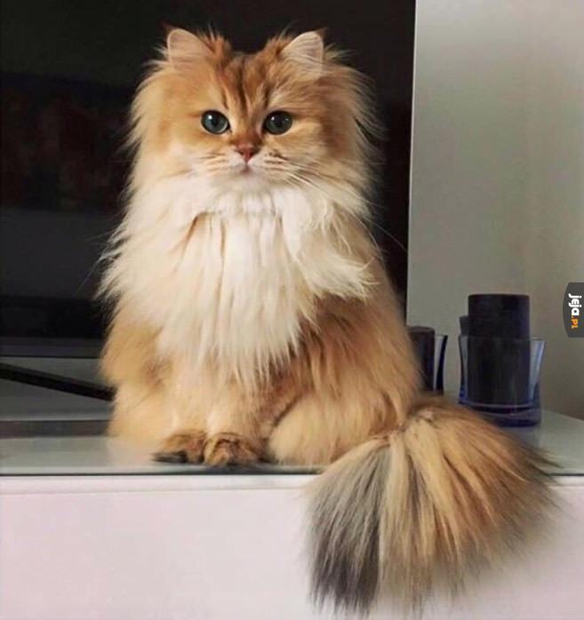 Ten kot jest ładniejszy ode mnie...