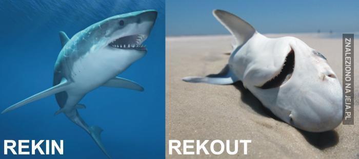 RekIN/RekOUT