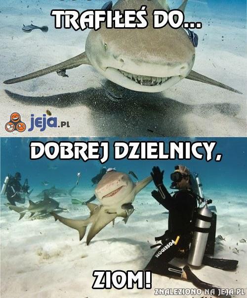 Uwaga na rekina?