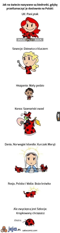 Tłumaczenie biedronki na różne języki