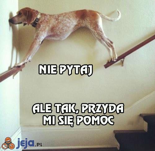 Nietypowy pies