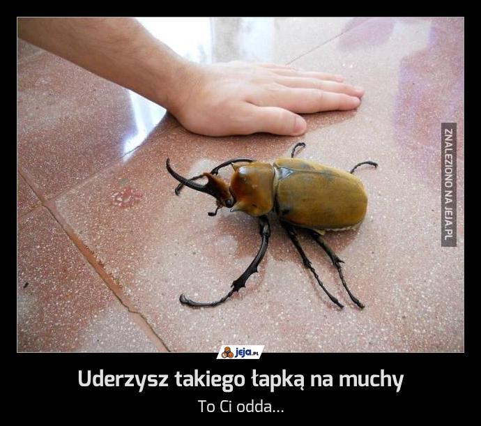 Uderzysz takiego łapką na muchy