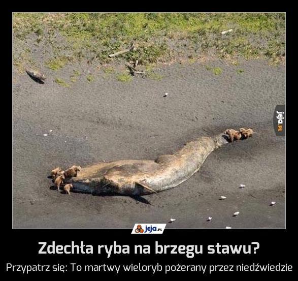 Zdechła ryba na brzegu stawu?
