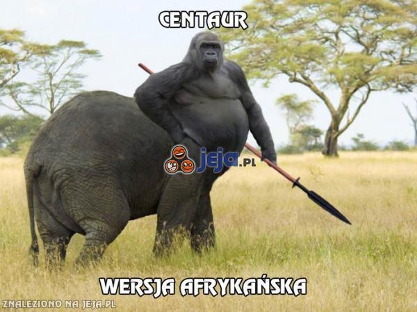 Centaur w Afryce
