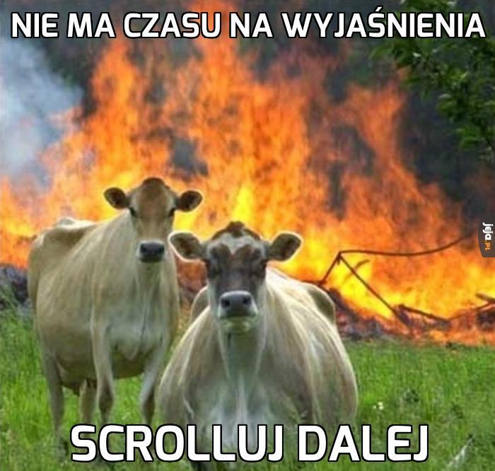 Krowy apokalipsy