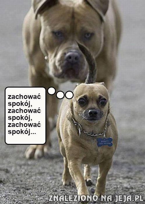 http://pobierak.jeja.pl/images/a/f/2/44795_tylko-spokoj-cie-uratuje.jpg