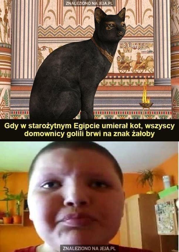 Biedny Kula, stracił kotka