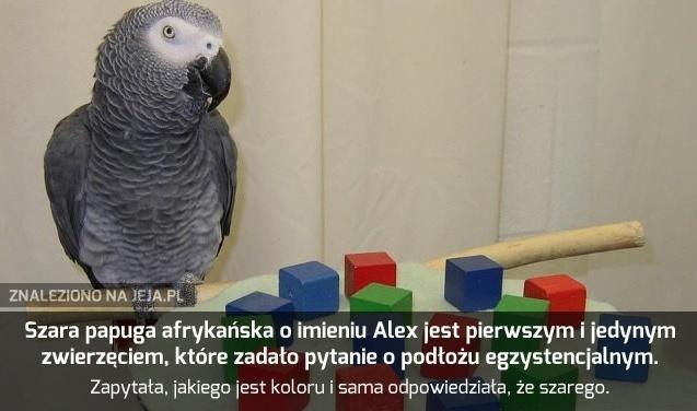 Papuga myśli, a ja gapię się w internety