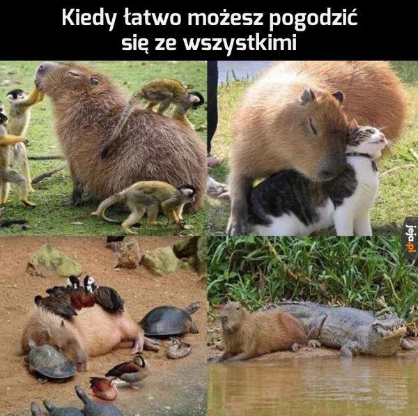 Przyjazna kapibara
