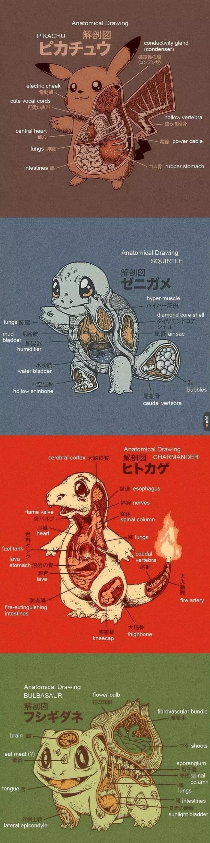 Gdyby ktoś się zastanawiał, jak wygląda wnętrze Pokemonów