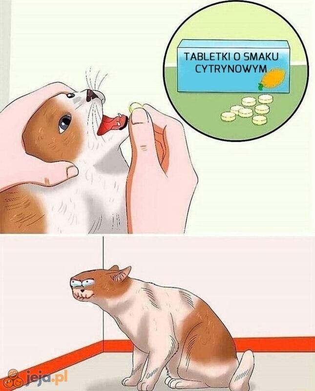 Twój kot je uwielbia!