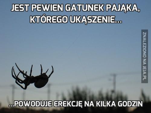 122304_jest-pewien-gatunek-pajaka-ktoreg