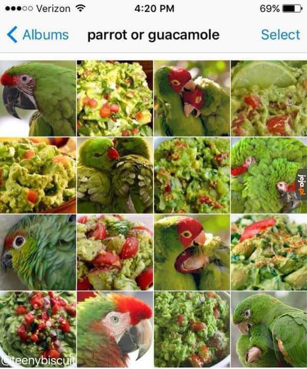 Papugi czy guacamole?