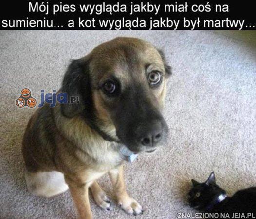 Pies ma chyba coś na sumieniu