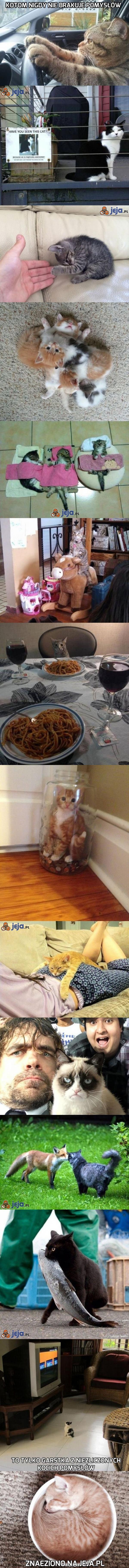 Pomysłowe koty