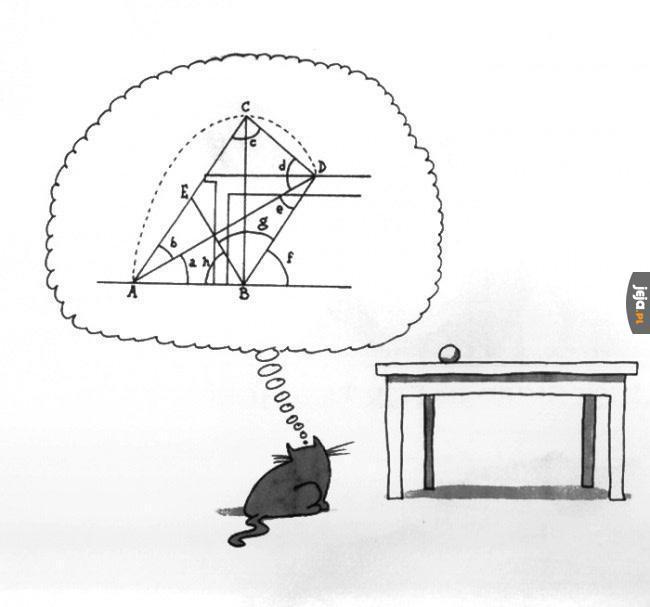 Dlaczego koty zatrzymują się na sekundę przed skokiem
