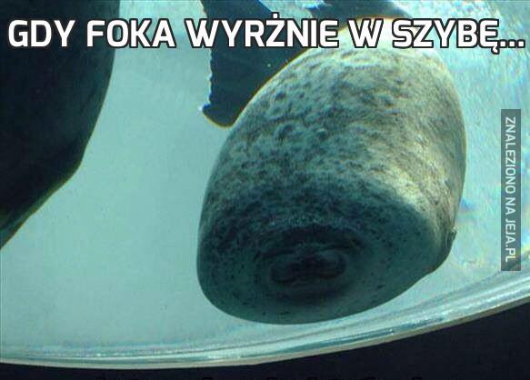 Gdy foka wyrżnie w szybę...