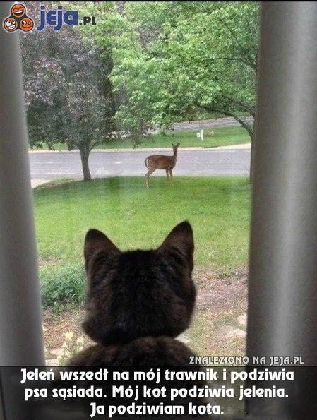 Fascynujące zwierzęta