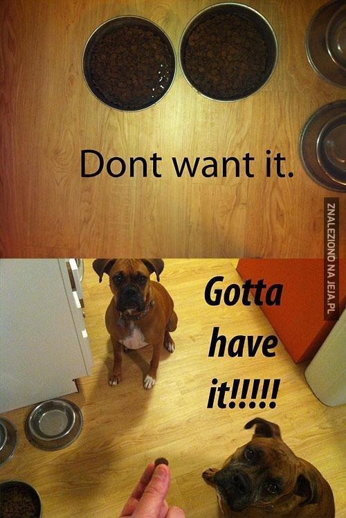 Logika psów