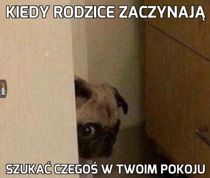 Podejrzany pies