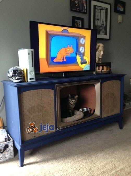 Kot w telewizorze