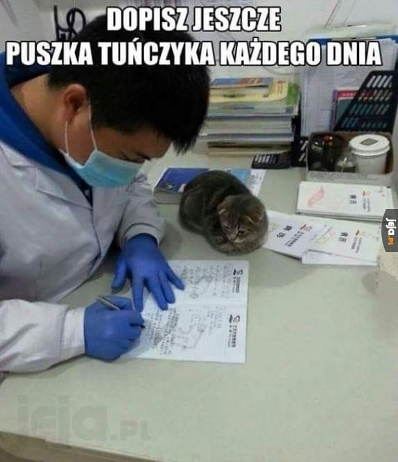 Recepta dla kota