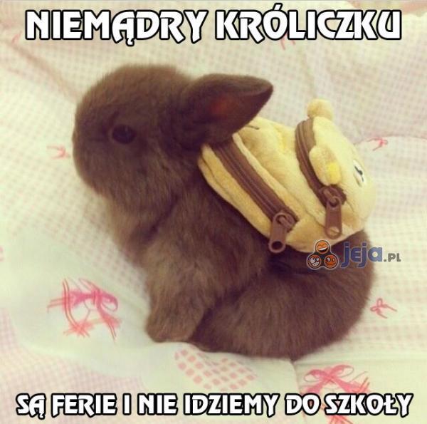 [Obrazek: 73586_kroliczek-chce-do-szkoly.jpg]