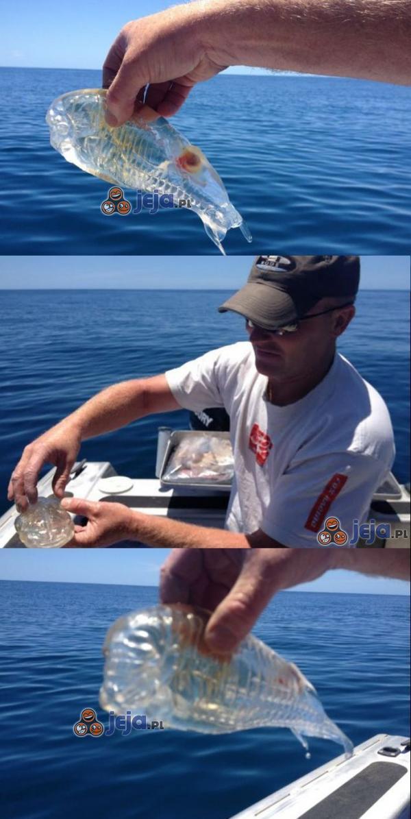 Przezroczysta ryba złapana w Nowej Zelandii