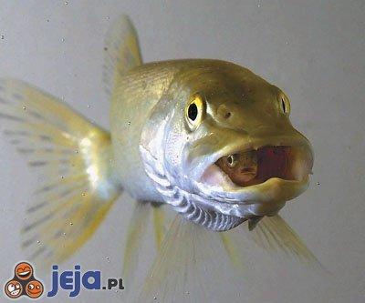 Dwie rybki