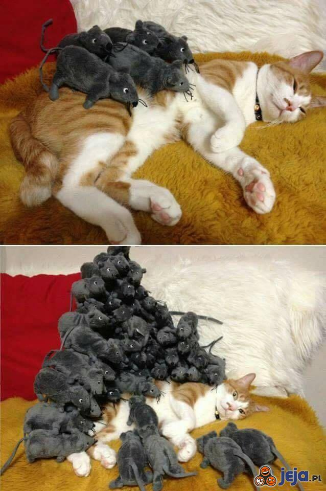 Testowanie leniwego kota