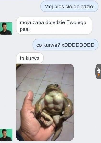 Napakowana żaba